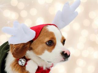 обои Собачка в новогоднем костюме фото