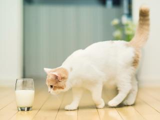 обои Шагая к стакану с молоком фото