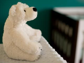 обои для рабочего стола: Мягкий белый мишка