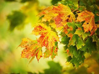 обои Осень красками украсила листву фото