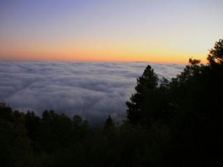обои Деревья над облаками фото