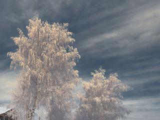 обои Морозная сказка на зимних деревьях фото