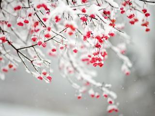 обои Падает снег на ветки фото