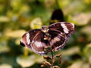 обои Бабочка на ветке со свежими ростками фото