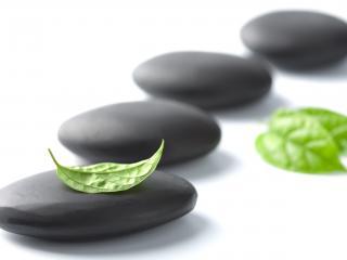 обои для рабочего стола: Фен-шуй - Зеленый листик на темных камнях