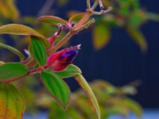обои Мохнатые листики и цветoк растения фото