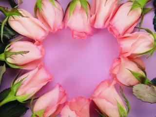 обои Сердце из бутонов роз фото