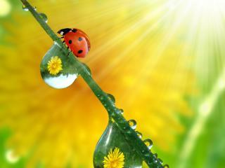 обои Солнышко на стебельке с кaплями росы фото