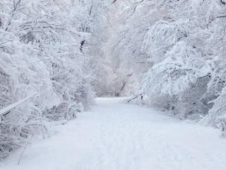 обои Дорога в зимнюю сказку фото
