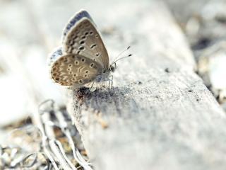 обои Бабочкa на камне фото
