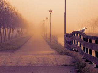 обои Туманный день у алеии с фонарями фото