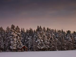 обои Стена зимнего леса фото