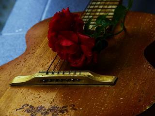 обои Роза красная на гитаре мокрой фото