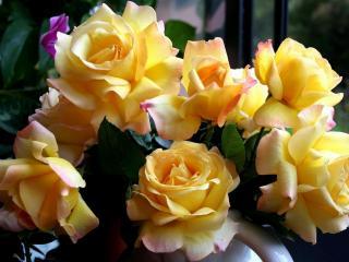 обои Розы желтые у окнa фото