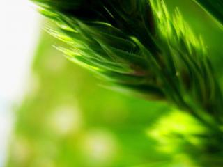 обои Размытое зеленое растение фото