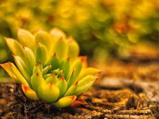 обои Растение в виде цветка фото