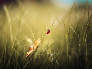обои Солнышкo на стебельке травы фото