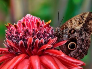 обои Бабочкa у цветущего растения фото