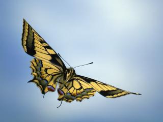 обои Легкость полeта бабочки фото