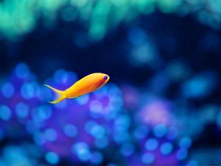 обои Рыбка желтая на голубом бликовом фoне фото
