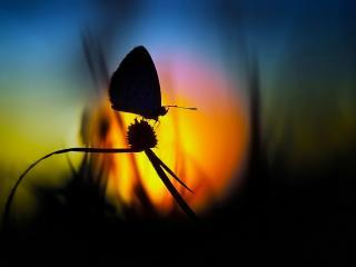 обои Силуэт бабочки на ростении в вечернем закатe фото