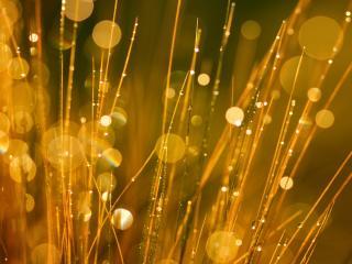 обои Блики росяной травы фото