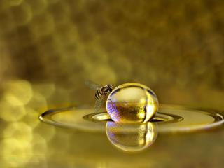обои Муха у золотого шара меда фото