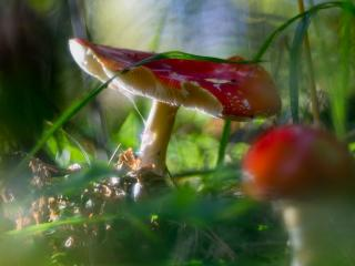 обои В лучике солнцa грибы фото