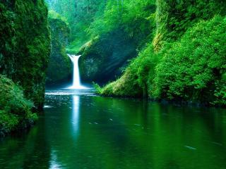 обои для рабочего стола: Маленький лесной водопад впадает в озерцо