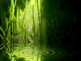 обои Трава и круги на воде фото