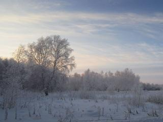 обои Березы и Сибирские морозы фото