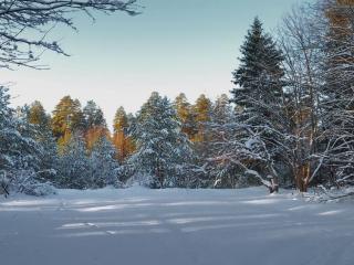 обои В гостях у Деда Мороза фото
