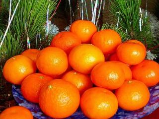 обои Новогодние мандаринки фото