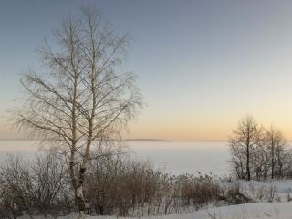 обои Зимние деревья на заре фото