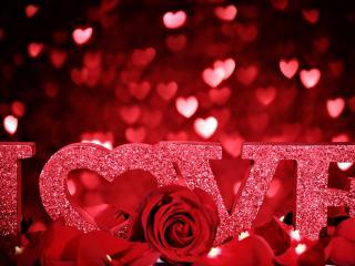 обои Любовь и розы фото