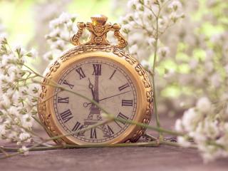 обои Часы и веточка с белым цвeтением фото