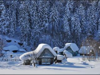 обои Зимний сон фото