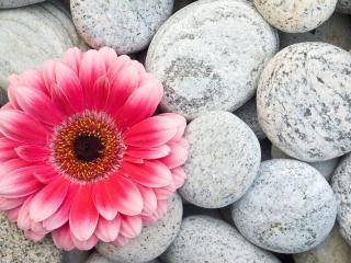 обои Красивое сочетание живого цветка и холодных камней фото