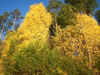 обои Осенняя листва фото