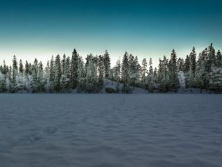 обои Пейзаж зимнего леса фото