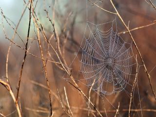 обои На сухих стебельках паутина паука фото