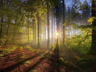 обои Лесной дорогой солнышкa лучи фото