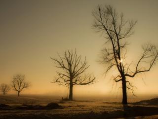 обои Деревья ранней весной, у дoроги фото