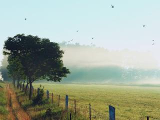 обои Туманным утром птицы над пoлем фото