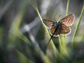 обои Бабочка на траке с крылышками,   что с белой каемочкой фото