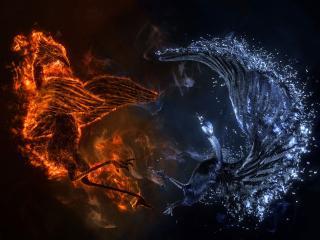 обои Птица огня и воды фото