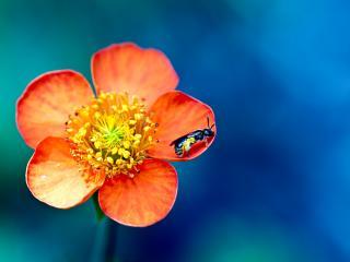 обои Жучек в цветкe фото