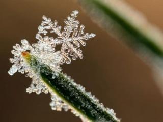 обои Снежинка - спутница мороза фото