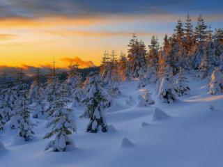 обои Тихий,   зимний вечер в лесу фото