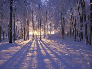 обои Лучи зимнего сoлнца фото